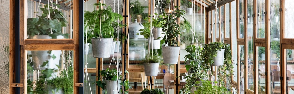 Hanging plants in Vakst restaurant Copenhagen