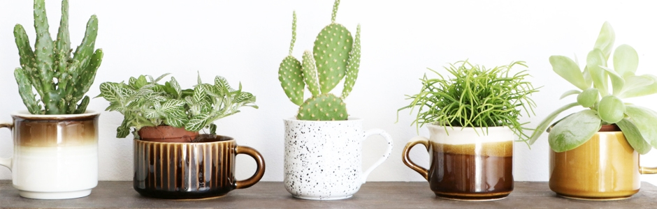 Styling plants with vintage mugs by Marij Hessel