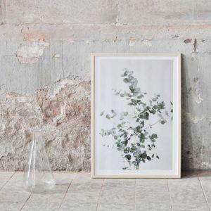 Eucalyptus print by Studio Joop