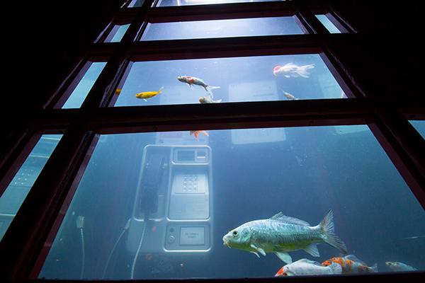 Aquarium-Lumiere-London