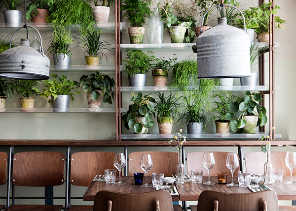 Restaurant interior with upcycled lighting and shelves lined with potted plants