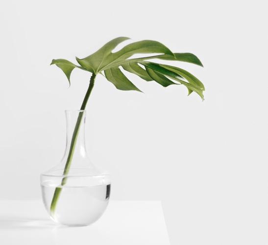 single leaf in a stem vase