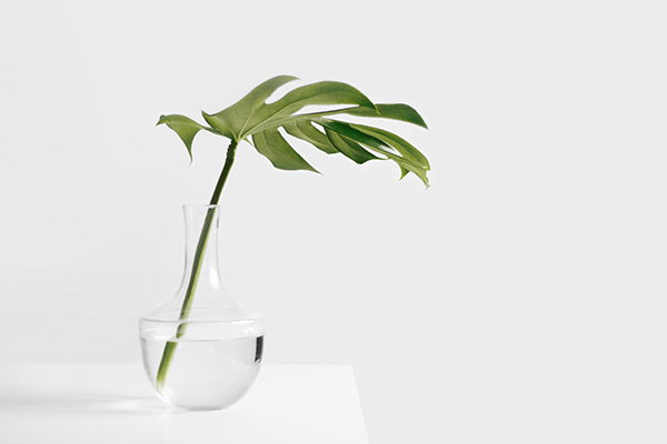 single leaf in glass vase