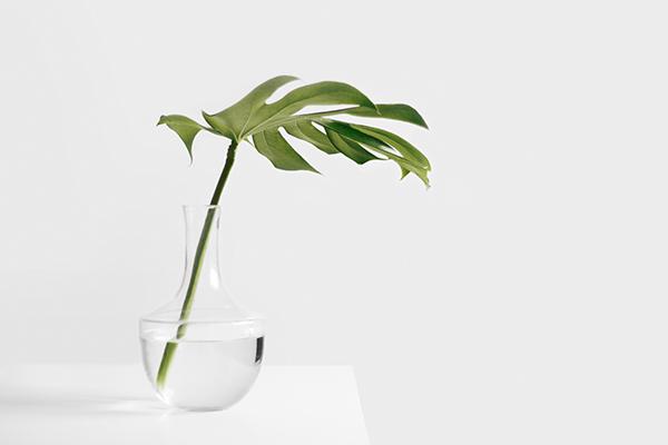 single leaf in glass vase