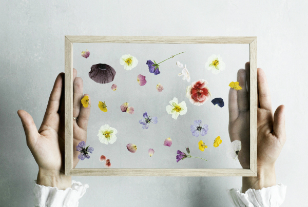 Flowers pressed between glass frame