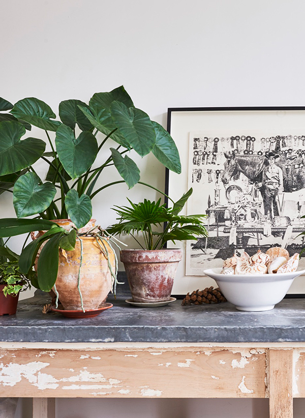 Indoor plant display inspiration