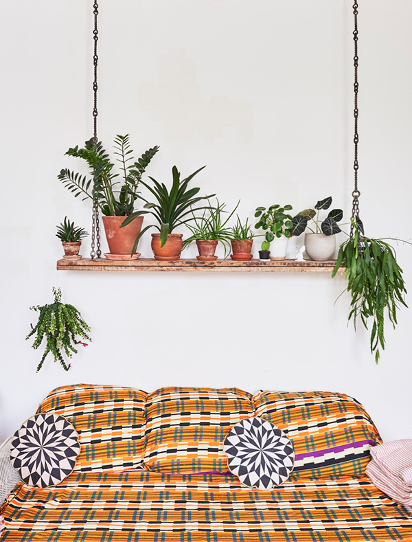 Plants displayed on a wooden hanging shelf