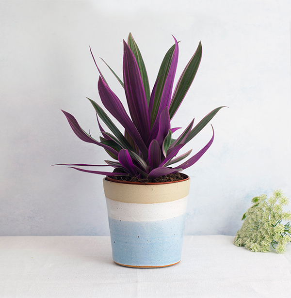 Blue glazed ceramic plant pot