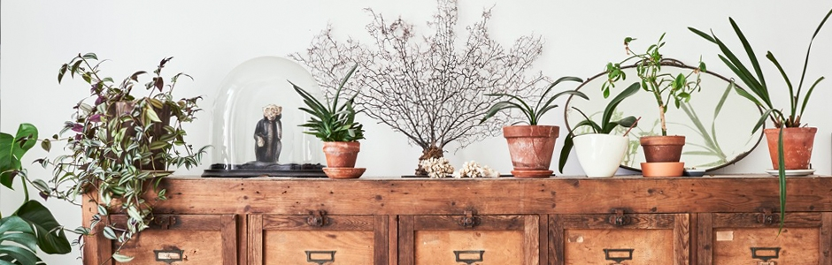 Potted plants on a vintage chest of drawers