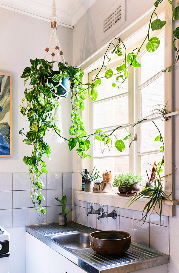 Hanging Plant In A Small Kitchen