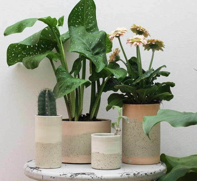 Modern speckled ceramic plant pots
