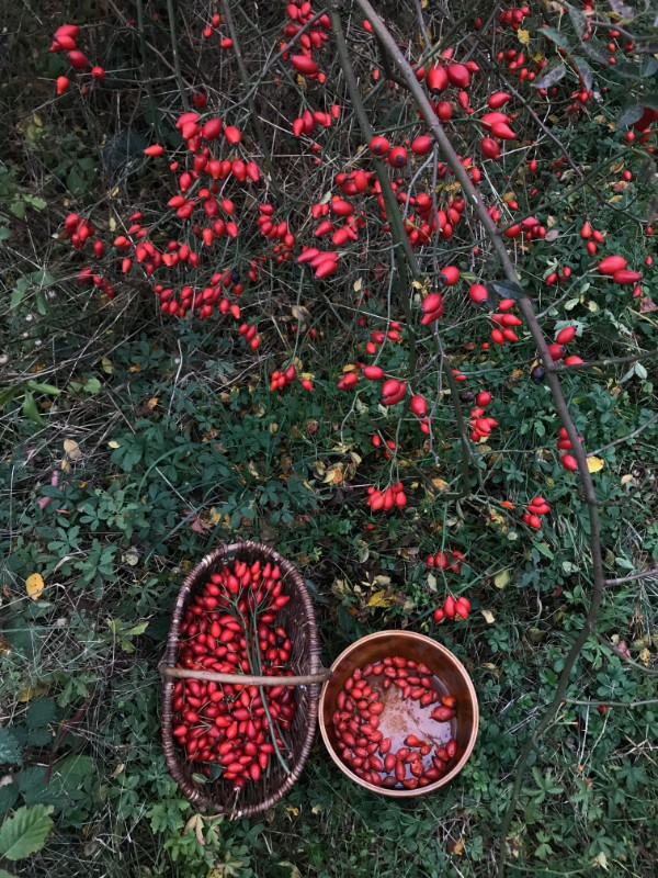 Foraging berries in the German countryside