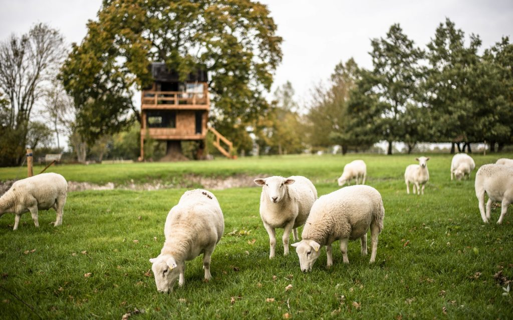 Cabin overlooking fields of sheep in rural Essex